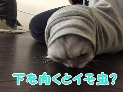 風 (95)