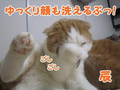 辰 (3)