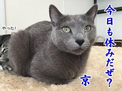 京 (53)