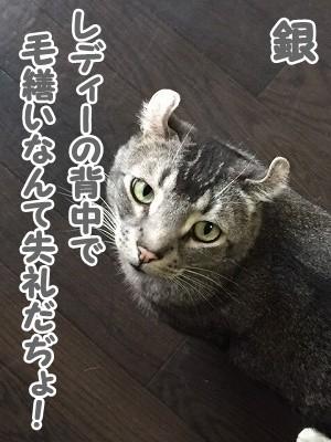 銀 (41)