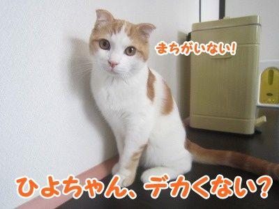 まお (9)