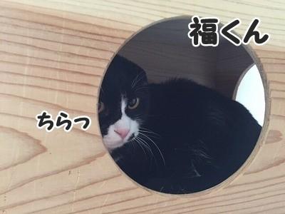 ふく (7)