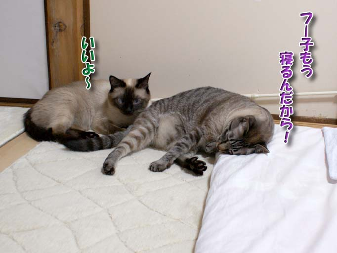 シャム猫2010063006