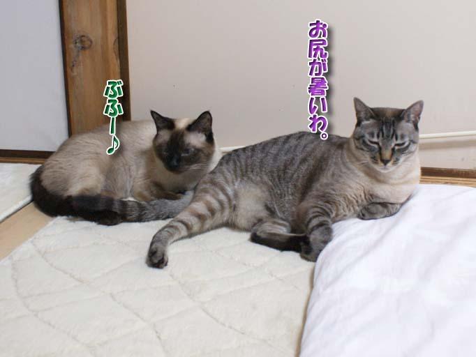 シャム猫2010063003