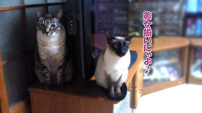 シャム猫2010062906