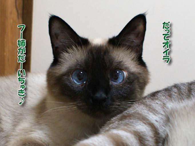 シャム猫2010063004