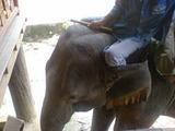 象さんその1