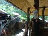 象さんその3