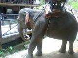 象さんその2