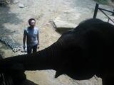 象さんその4