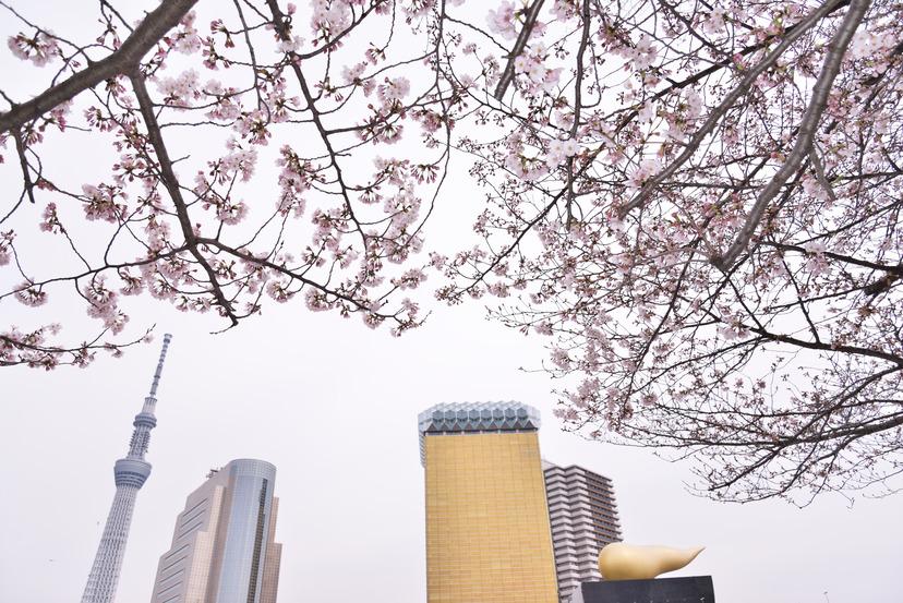 D610 桜_069