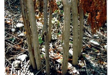 2009年の苗木柵の保護方法20151112