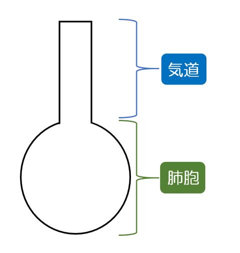 気道・肺胞の簡易モデル