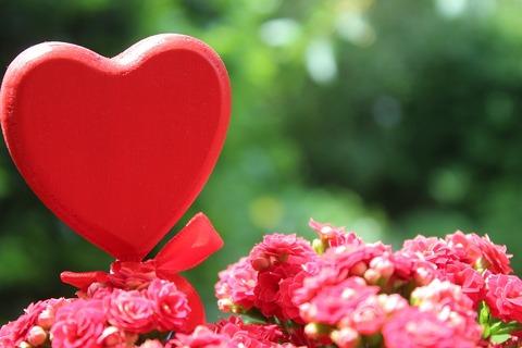 flower-3434625_960_720