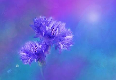 flowers-1204165_1920