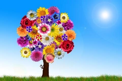flowers-2731320_1920