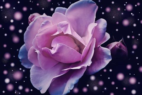 rose-574020_1920