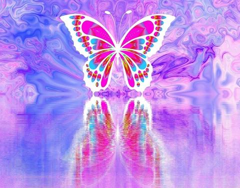 butterfly-2071875_960_720