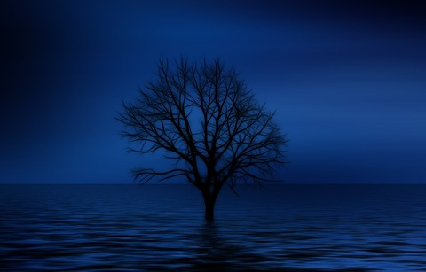 tree-738816_960_720