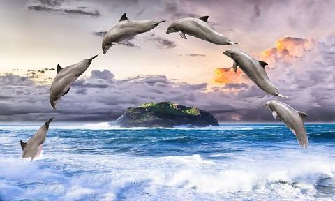 dolphin-1548405_960_720