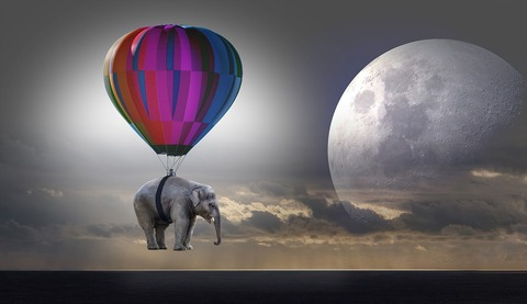 elephant-2611677_960_720