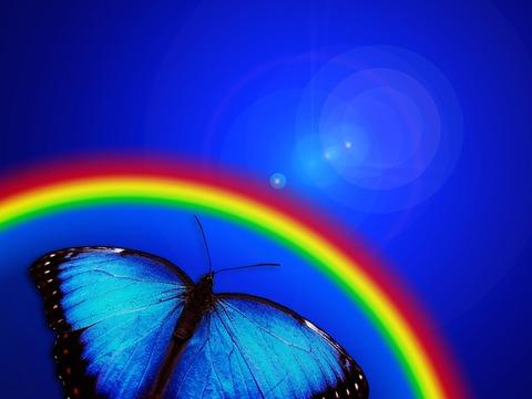 butterfly-765126_960_720