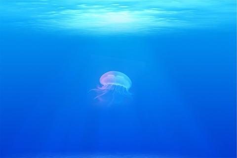 jellyfish-698521_960_720
