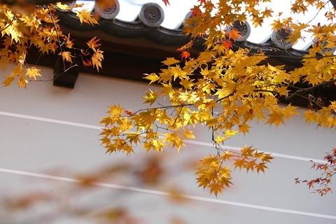 kyoto-3836980_960_720