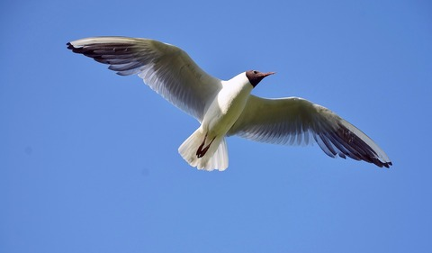 seagull-342718_1920