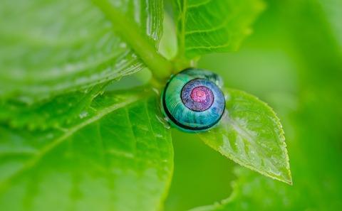 snail-1335473_960_720