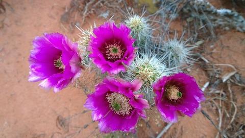cactus-336757_1920