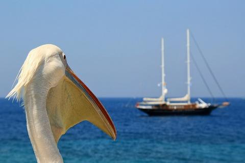 pelican-4260045_960_720