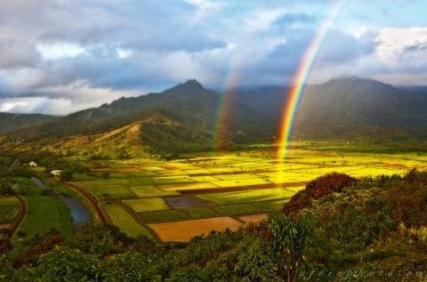kauai-locations-hanalei-taro