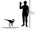 120px-Human-eoraptor_size_comparison(v2)