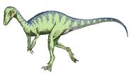 250px-Eoraptor_sketch5