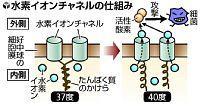 細菌感染、発熱で攻撃