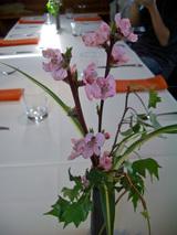 3/31桃の花