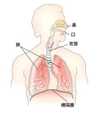 呼吸(2)空気が取り込める胸郭の仕組み
