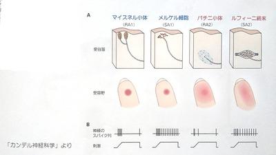 親指の使い方のヒント4 動きの方向性 意図と感触