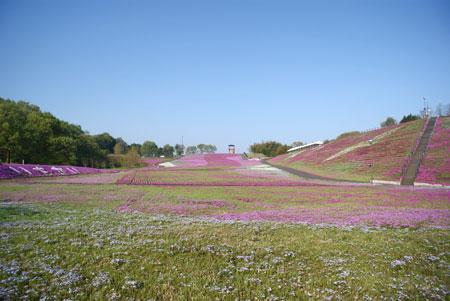 shibasakura2015_01.jpg