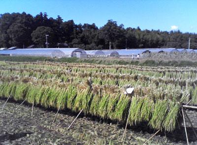 収穫2009_0913_05.jpg