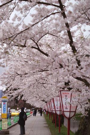 hisosaki04.jpg