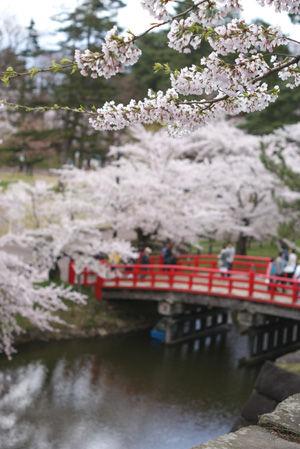 hisosaki02.jpg