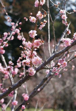 偕楽園2009_0321_02.jpg