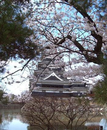 松本城桜01