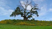 tree-3156341_960_720