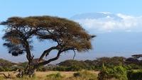kilimanjaro-720845__340