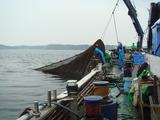 三崎定置網漁2