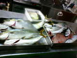 城ヶ島の魚