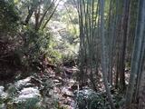 三浦の小川